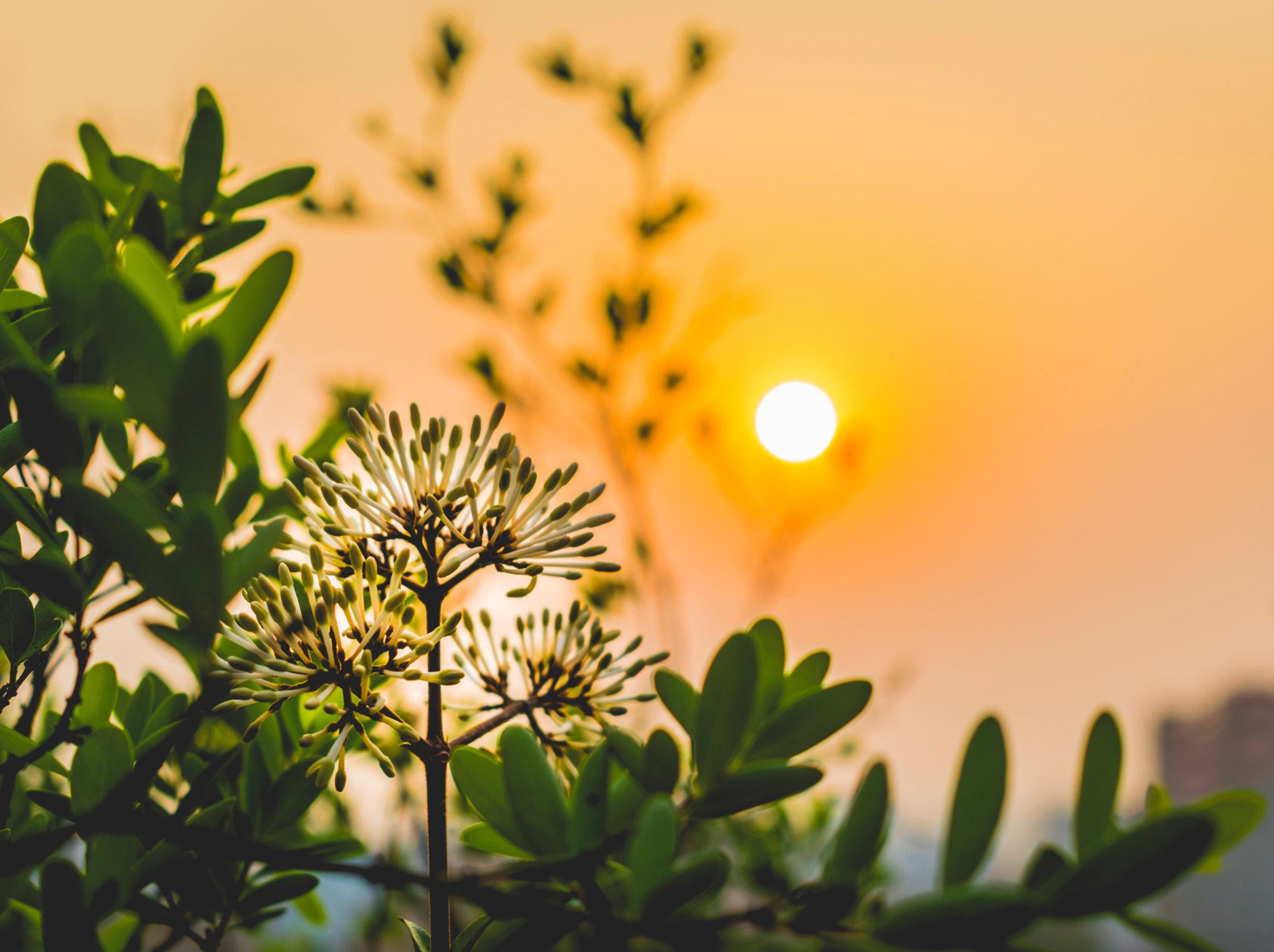 Hope in a new dawn